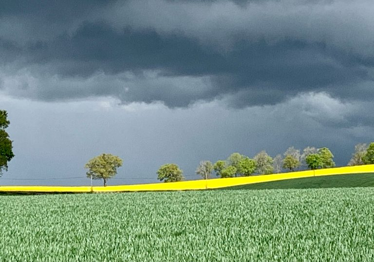 Landscape image with grass in the foreground, yellow canola field behind and grey rainclouds above.